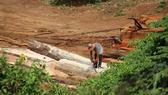 Tăng cường phòng chống khai thác, vận chuyển gỗ trái phép