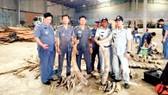 Campuchia thu giữ 3,5 tấn ngà voi