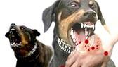 Tiêm ngừa 21 người bị chó dại cắn trong một ngày tại TP Hà Tiên