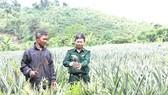 Bộ đội Biên phòng hướng dẫn đồng bào Pa Cô, Vân Kiều ở bản Trung Đoàn, Làng Ho, một trọng điểm trên đường Trường Sơn năm xưa chăm sóc thơm trồng thí điểm