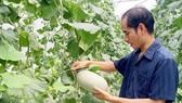 Nắm rõ số liệu để nâng chất sản phẩm nông nghiệp