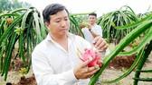 Đẩy mạnh xuất khẩu chính ngạch nông sản vào thị trường khó tính