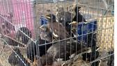 Tàn ác đối với động vật là hành vi phải lên án