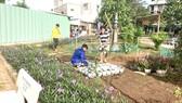 Tôi có thấy: Cải tạo bãi rác thành công viên hoa