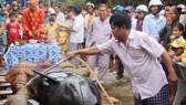 Cá voi vẫn còn thở, kêu và được đặt tại Vạn đầm Lăng Ông thôn Trung Lương chờ ngừng thở để mai táng theo phong tục làng biển.