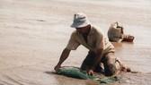 Hơn 100 tấn nghêu ở Bến Tre bị chết do độ mặn cao