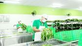 Kết nối chuỗi sản xuất - tiêu dùng thực phẩm sạch