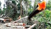 Xà xẻo tiền dịch vụ môi trường rừng