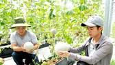 Xuất khẩu nông sản có dấu hiệu chựng lại
