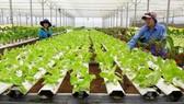 TPHCM kiến nghị Trung ương hỗ trợ cho HTX nông nghiệp
