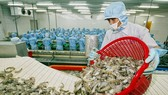 Phấn đấu xuất khẩu tôm  đạt 10 tỷ USD vào năm 2025