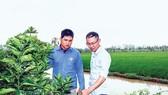 Anh Tư (trái) nhiệt tình chia sẻ kiến thức làm trang trại với bạn bè.