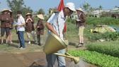Du khách tham quan, trải nghiệm tại làng rau Trà Quế (Hội An)