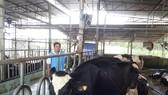 TPHCM phát triển 6 sản phẩm nông nghiệp chủ lực
