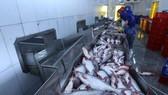 Chế biến cá tra xuất khẩu tại Công ty trách nhiệm hữu hạn Công nghiệp Thủy sản miền Nam. (Nguồn: TTXVN)