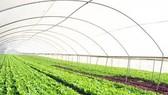 Có 80.000-100.000 doanh nghiệp hoạt động trong lĩnh vực nông nghiệp