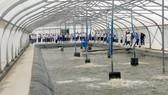 Ứng dụng công nghệ cao trong nuôi tôm nước lợ tại huyện Nhà Bè, TPHCM, mang lại nhiều hiệu quả. Ảnh: ĐĂNG LÃM