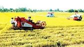 Tổ chức kinh tế hiện không được nhận quyền chuyển nhượng quyền sử dụng đất trồng lúa, đất rừng phòng hộ, đất rừng đặc dụng của hộ gia đình, cá nhân
