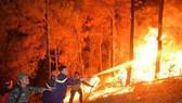 Phó Chủ tịch Quốc hội đề nghị Chính phủ tăng cường công tác quản lý, bảo vệ rừng và có giải pháp hiệu quả phòng cháy, chữa cháy rừng