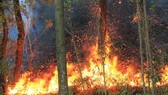Tính chung 7 tháng, diện tích rừng bị thiệt hại là 1.740,5 ha