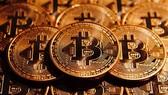 Điều tra một nữ nhân viên kế toán chiếm đoạt hơn 8,2 tỷ đồng để chơi bitcoin