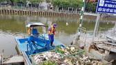 Cá chết nhiều trên kênh Nhiêu Lộc – Thị Nghè. Ảnh: ĐAN NGUYÊN