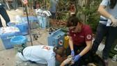Nhân viên cứu hộ động vật kiểm tra các thông số sức khỏe của cá thể gấu