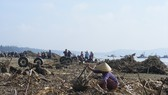 Kinh hoàng củi, rác ngập bãi biển Sầm Sơn tỉnh Thanh Hóa