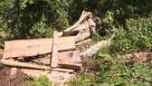 Vụ phá rừng quy mô lớn ở Đắk Lắk: Phát hiện thêm 500m³ gỗ