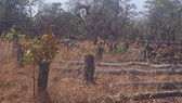 Có hay không cán bộ tiếp tay để lâm tặc phá hơn 7,3ha rừng