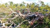Yêu cầu kiểm điểm tổ chức, cá nhân liên quan vụ xà xẻo tiền dịch vụ môi trường rừng
