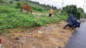 Báo cáo Tổng cục Đường bộ vụ phát quang quốc lộ bằng thuốc diệt cỏ