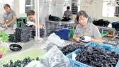 Sản xuất sản phẩm cao su cung ứng công nghiệp hỗ trợ tại Công ty cổ phần Thống Nhất. Ảnh: CAO THĂNG