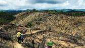 """Rừng lại """"biến mất"""" ở Bình Định: Trách nhiệm lớn nhất thuộc về chủ rừng"""