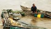 Lũ tràn về bất ngờ, cuốn trôi 4 tấn cá diêu hồng của người dân