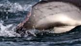 Câu cá ngừ gần đảo Trường Sa Lớn, 1 ngư dân bị cá cắn đứt bàn tay