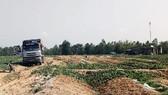 """Chủ cho vay nặng lãi """"vây"""" ruộng dưa của nông dân Bình Định để đòi nợ"""