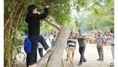 Nghề mộc làng Kim Bồng rộn ràng giỗ Tổ