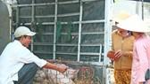 Quảng Nam: Hỗ trợ người dân có heo bị tiêu huỷ do dịch tả heo châu Phi