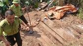 Một hầm gỗ mun lậu quý hiếm trong vườn nhà ông Kính