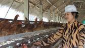 Báo động thực phẩm chăn nuôi, thuốc thú y kém chất lượng