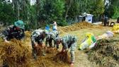 Lực lượng bộ đội giúp người dân huyện Giang Thành (Kiên Giang) thu hoạch lúa chạy lũ