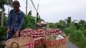 Hướng đến mục tiêu xuất khẩu trái cây đạt 3,6 tỷ USD vào năm 2020