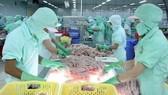 Hoa Kỳ áp thuế cao cá tra, cá basa Việt Nam