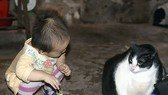 Mèo nặng nhất thế giới ở Nam Định
