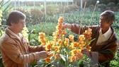 Tôn vinh 126 người trồng hoa Festival hoa Đà Lạt
