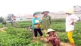 Thiệt hại nặng vì VTV dàn dựng clip, người trồng rau đòi bồi thường