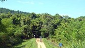 Phú Yên lấy 870ha rừng làm dự án nuôi bò