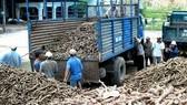 Quy hoạch nguyên liệu Bio-ethanol Dung Quất