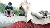 Gia hạn cho vay tín dụng xuất khẩu cà phê